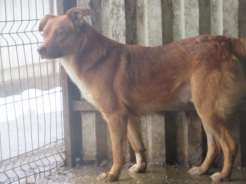 SANKUKA, mâle, croisé, né en 2014, taille moyenne 20kg - REMEMBER ME LAND Sankuk12