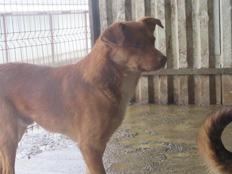 SANKUKA, mâle, croisé, né en 2014, taille moyenne 20kg - REMEMBER ME LAND Sankuk19
