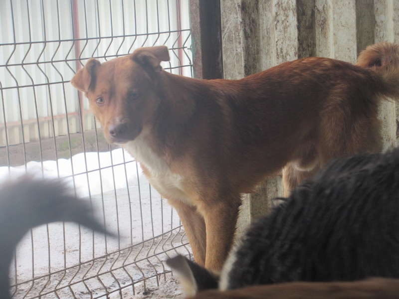 SANKUKA, mâle, croisé, né en 2014, taille moyenne 20kg - REMEMBER ME LAND Sankuk21
