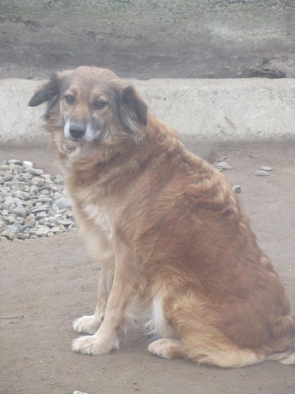 SUNFALL -  SUNFALL - femelle croisée de taille moyenne, née en 2011 - REMEMBER ME LAND Sunfal15