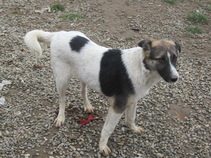 TEXAS, mâle croisé, de taille moyenne, né environ en avril 2017 - REMEMBER ME LAND - ADOPTE PAR CORINNE (Belgique) Texas_18