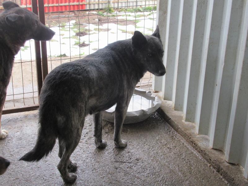 TIGRETTE - femelle croisée de taille moyenne, née en 2009 ( PASCANI) - REMEMBER ME LAND Tigret16