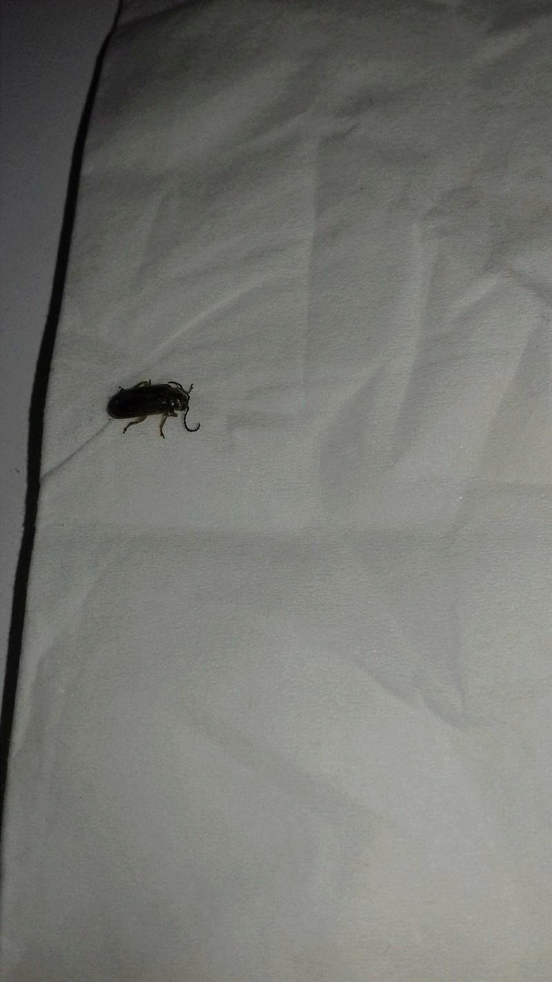 identifier un insecte 24209811