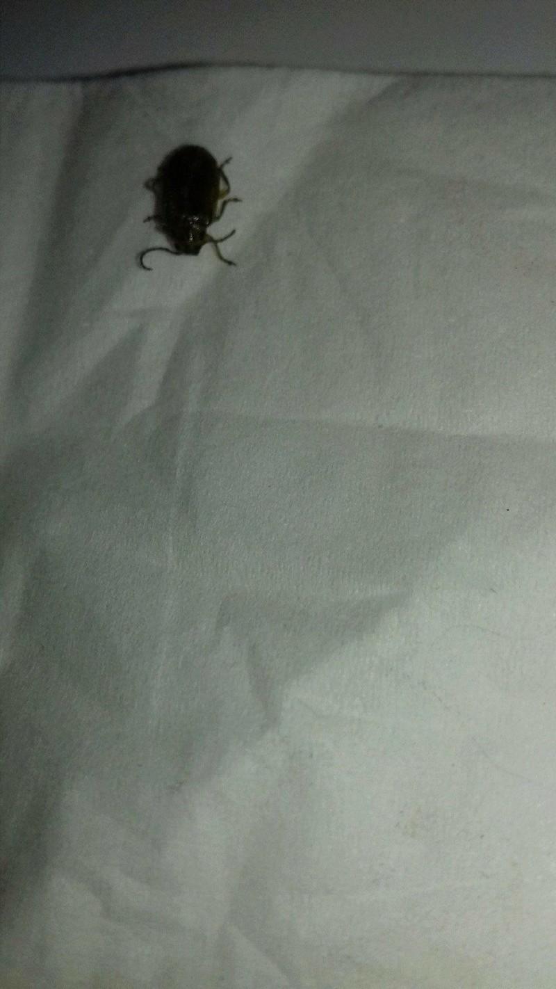 identifier un insecte 24251211