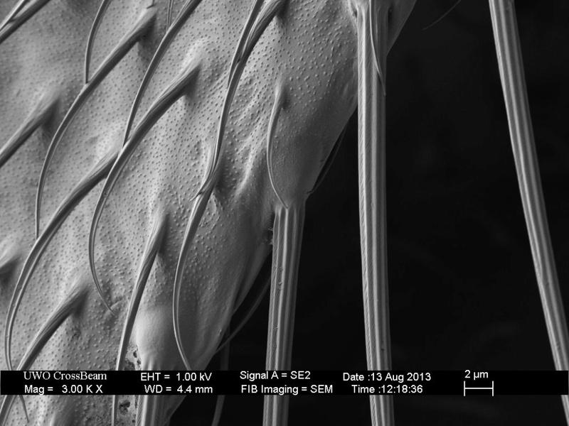Под микроскопом (обновлено) 1_4a0710