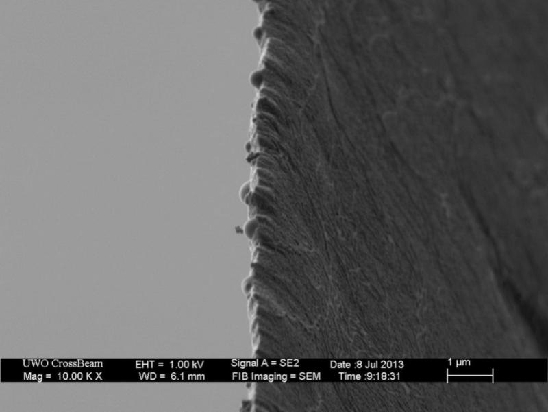 Под микроскопом (обновлено) E_eae_10