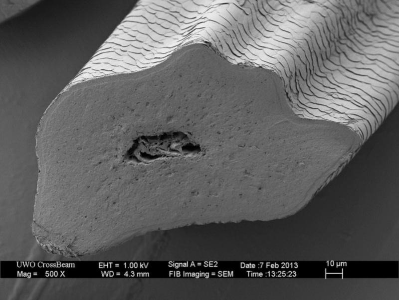 Под микроскопом (обновлено) I_500-10