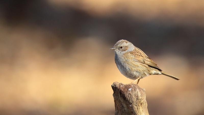Les oiseaux de mon jardin ou des abords directs Aa_acc11