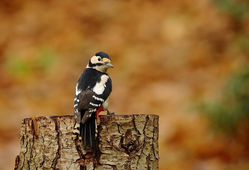 Les oiseaux de mon jardin ou des abords directs Aa_pic18