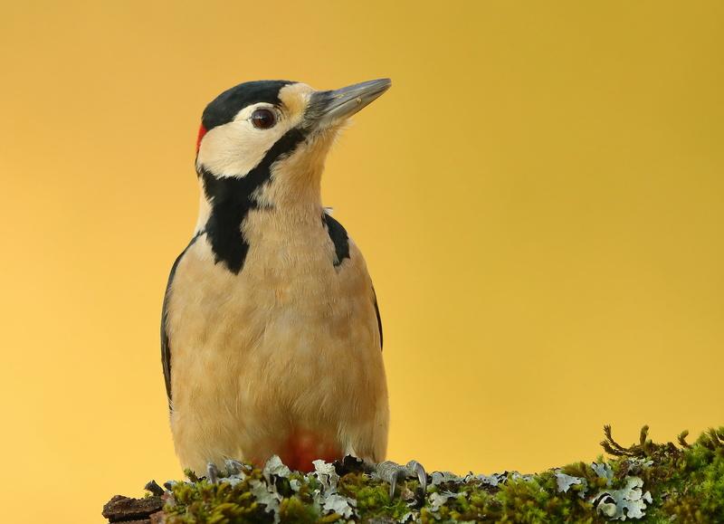 Les oiseaux de mon jardin ou des abords directs - Page 2 Aa_pic30