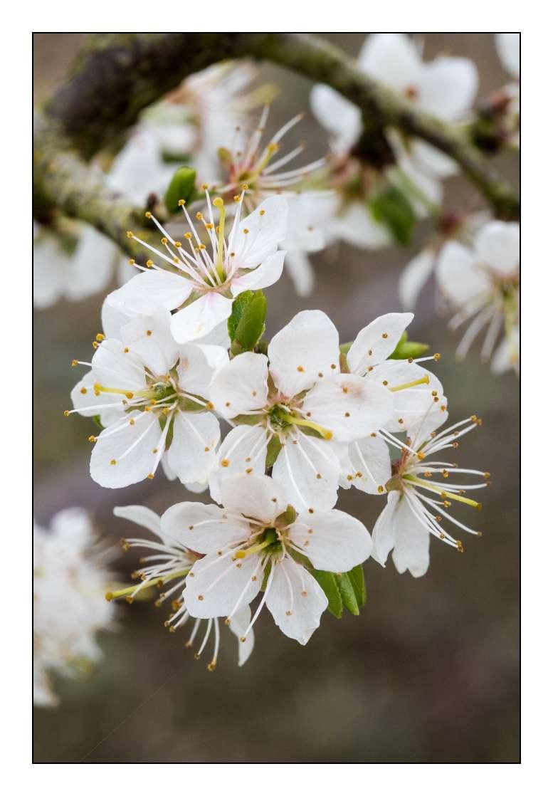 C'est le printemps _1003413