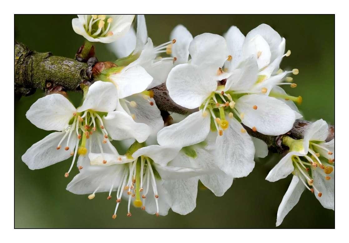 C'est le printemps _1003415