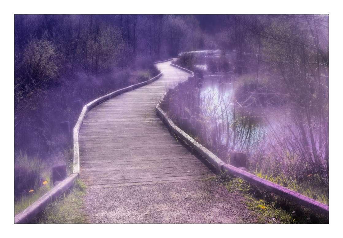 Le chemin du lac _1003810