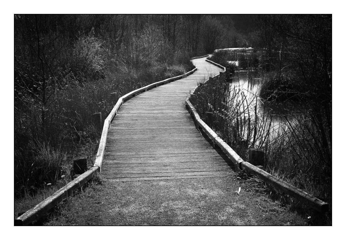 Le chemin du lac _1003811
