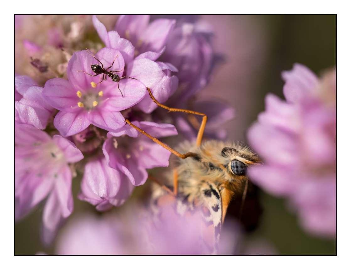 A la chasse aux papillons _1005310