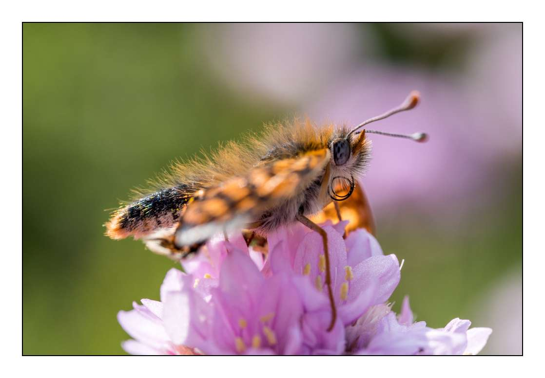 A la chasse aux papillons _1005311