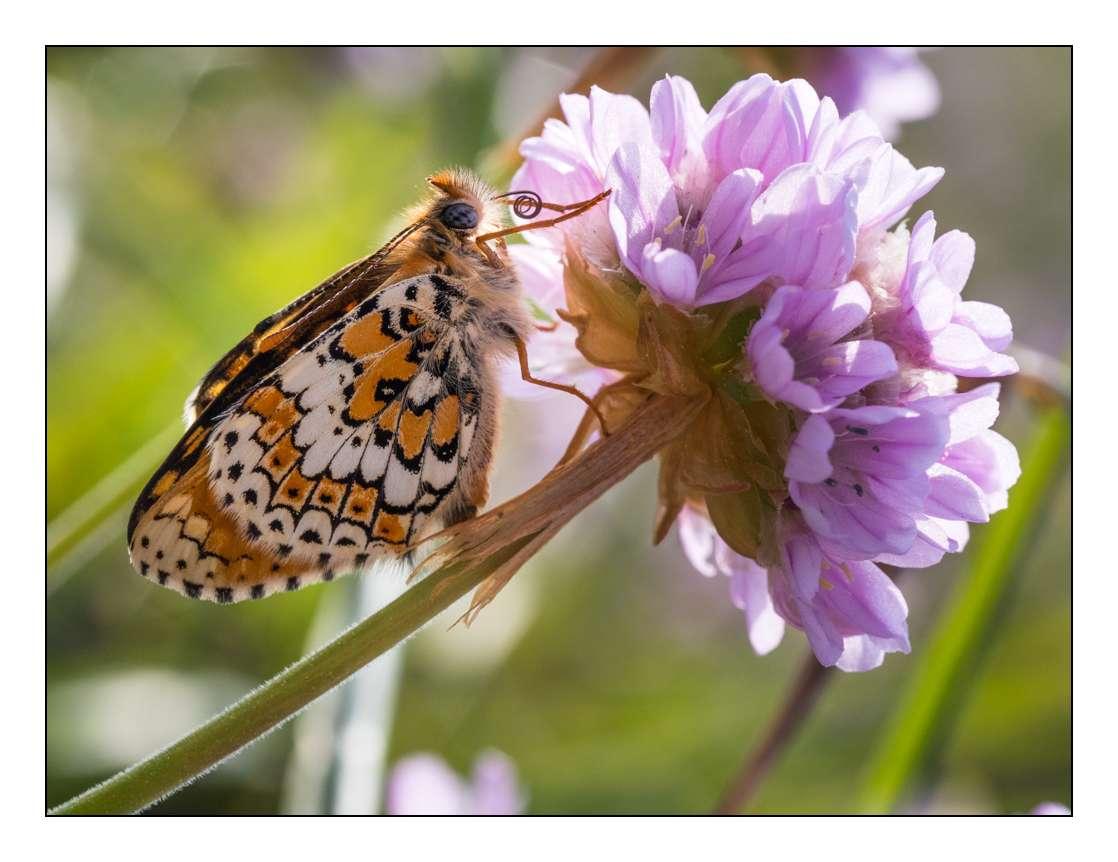 A la chasse aux papillons _1005312
