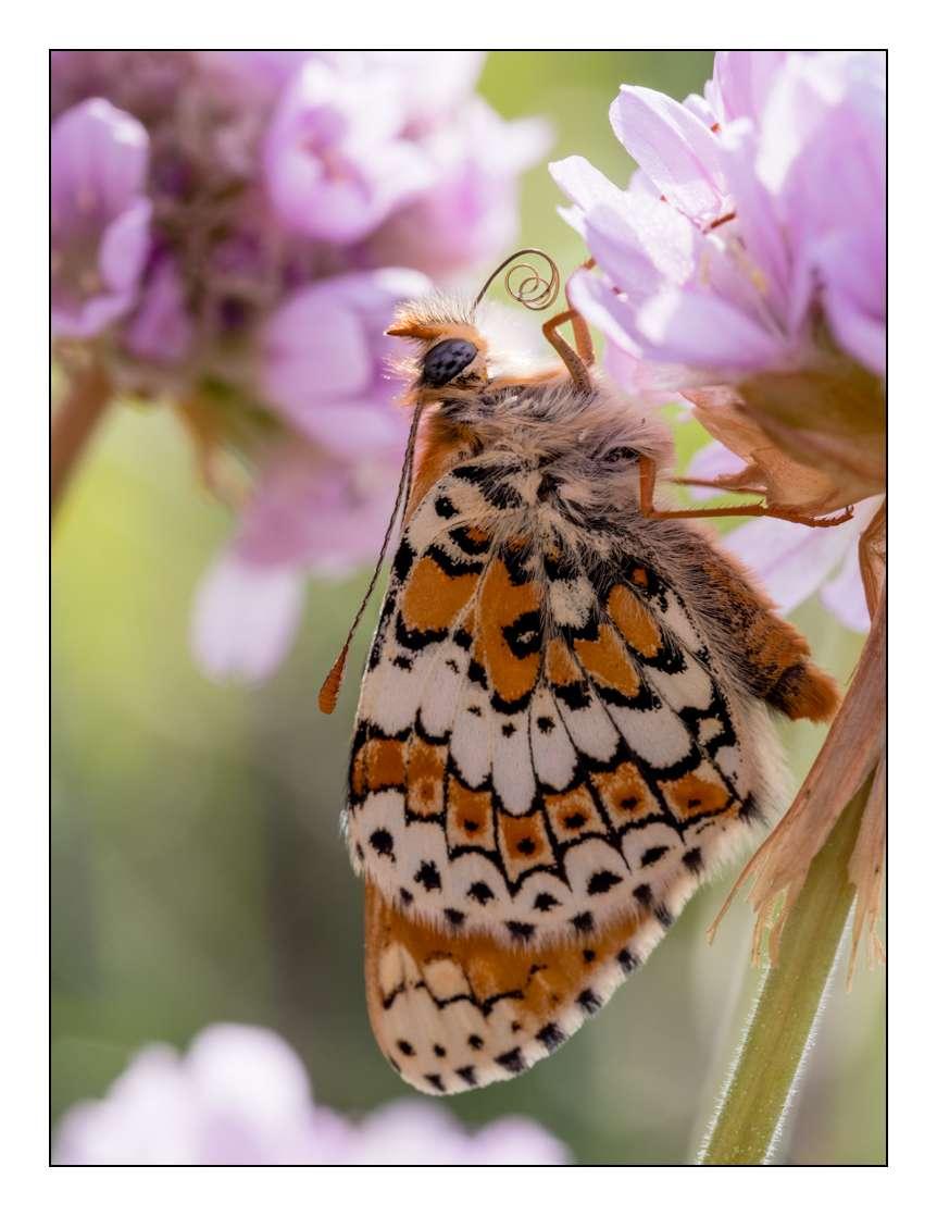 A la chasse aux papillons _1005313