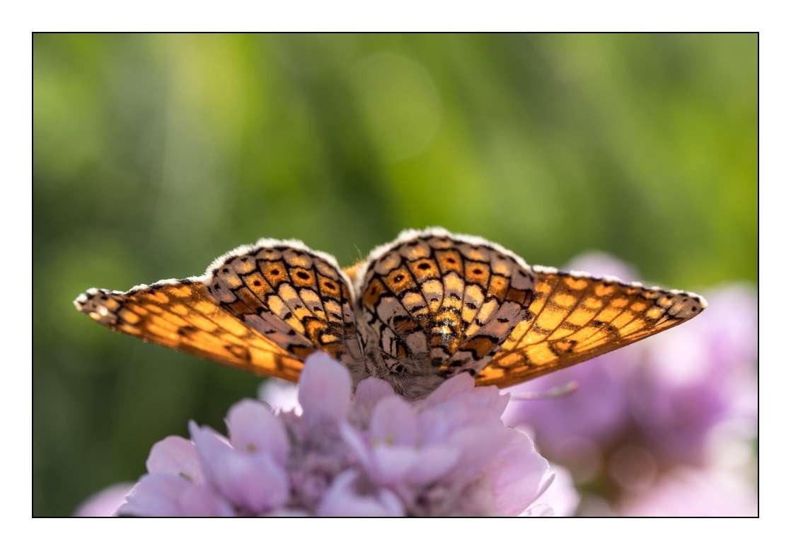 A la chasse aux papillons _1005314