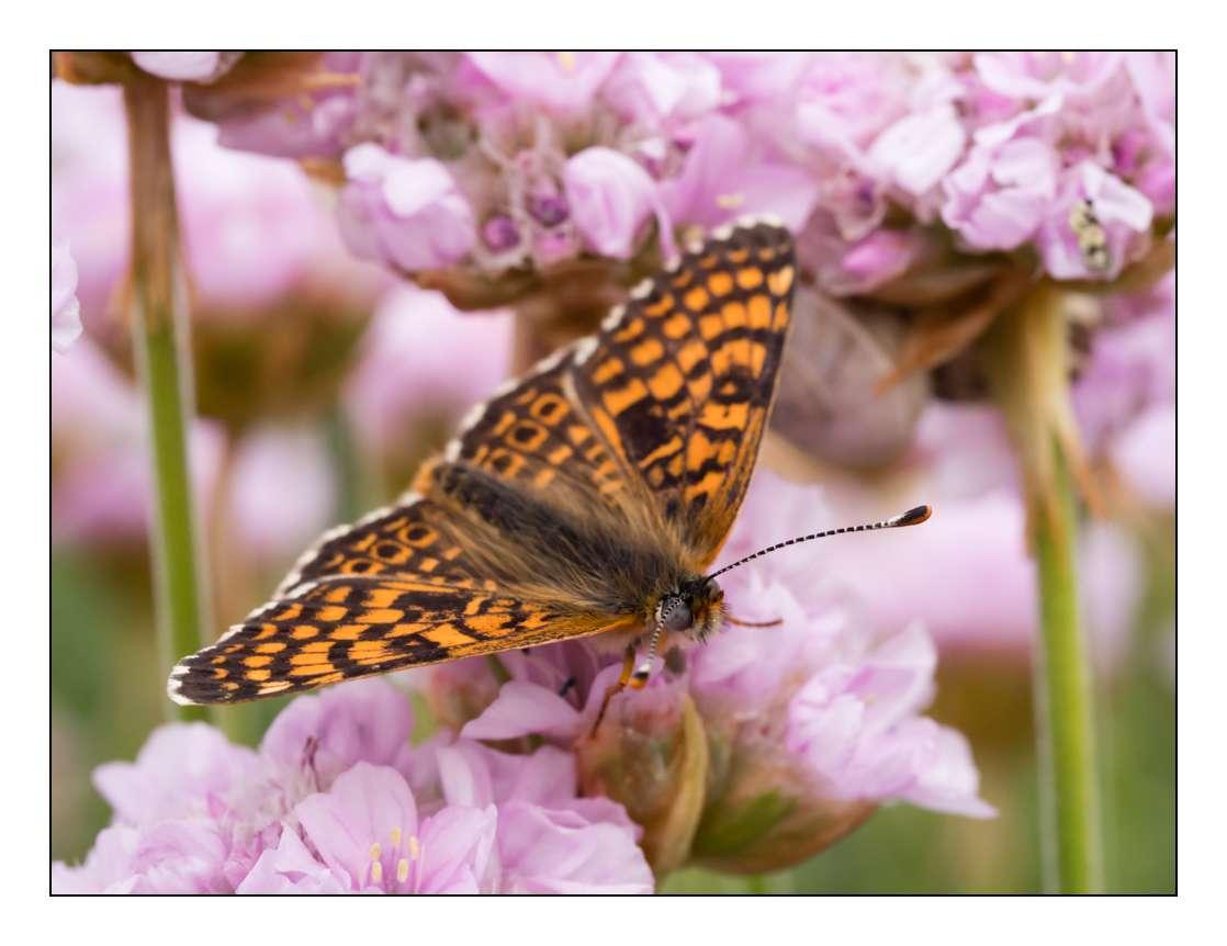 A la chasse aux papillons _1005410