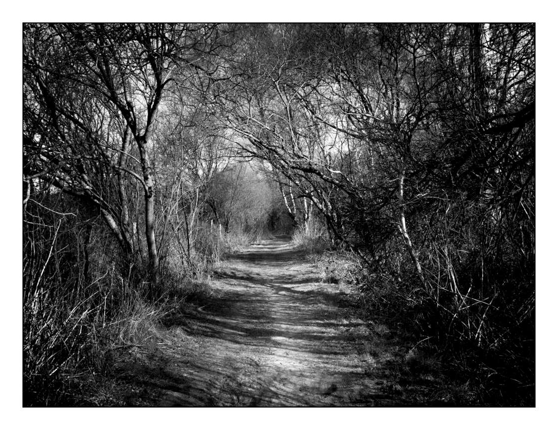 Paysage (Pierrebois) _1210723