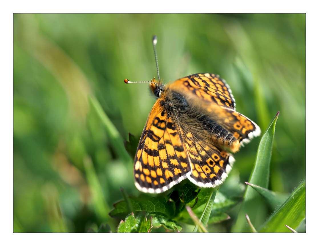 A la chasse aux papillons P1005310