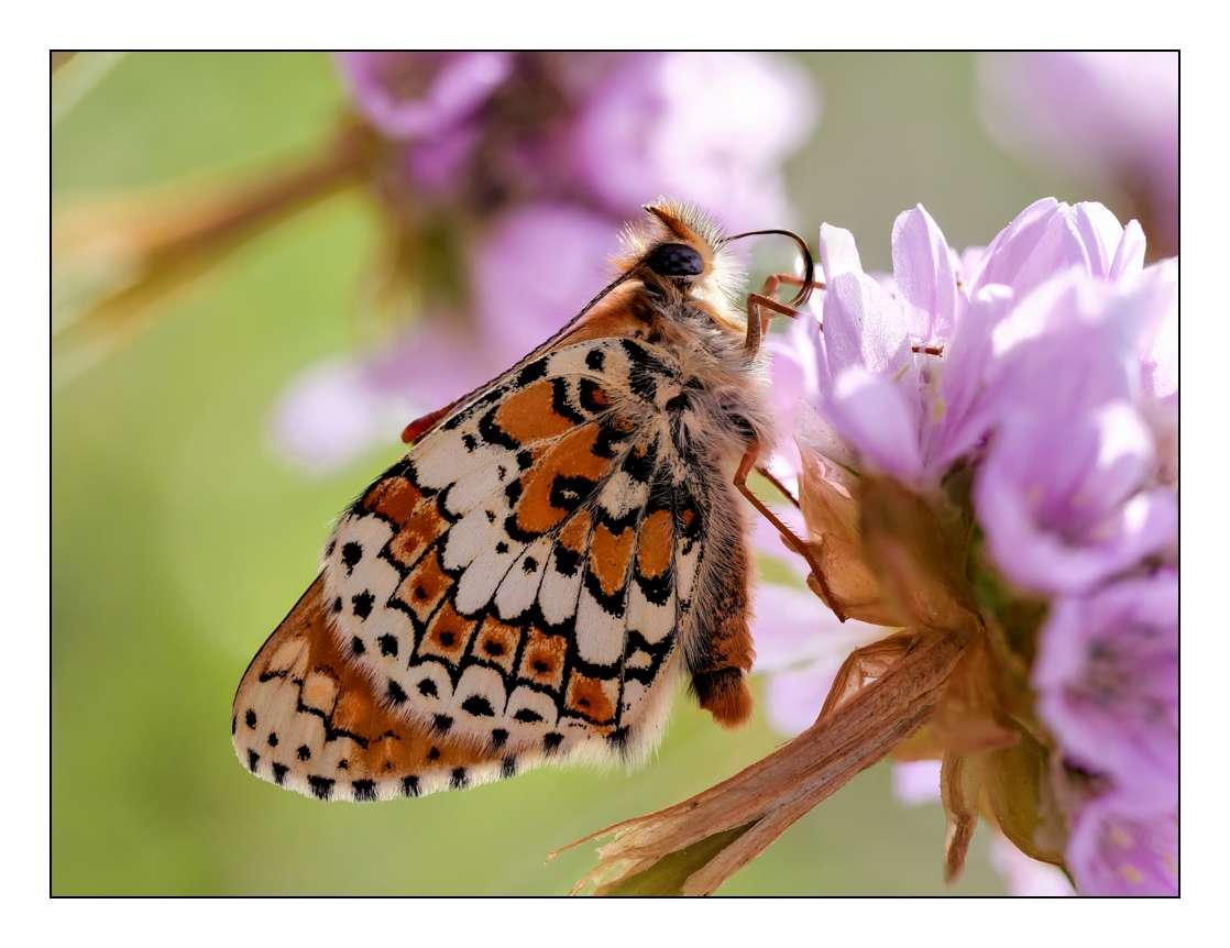 A la chasse aux papillons P1005311