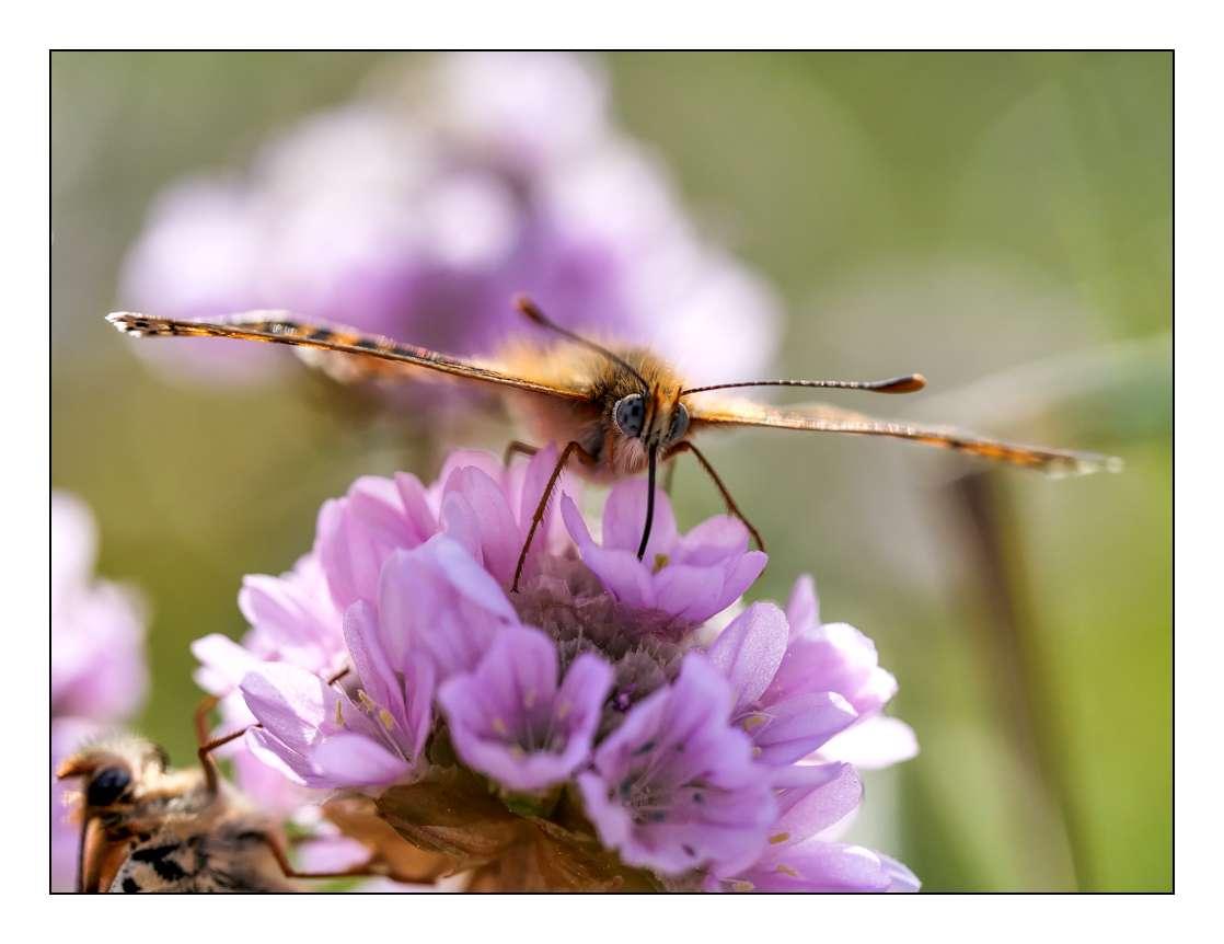 A la chasse aux papillons P1005313