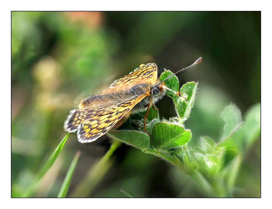 A la chasse aux papillons P1005314
