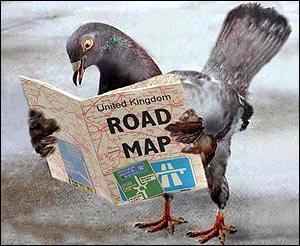 clips de carénage - Page 3 Pigeon10