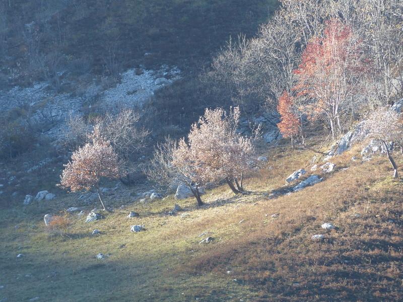Fin d'automne dans les Bauges P1040110