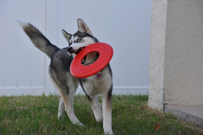 HOTM: Dorky Dogs Chat Dsc_0715