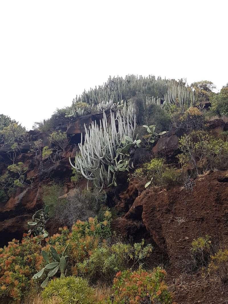 Espagne - La Palma (Isla Bonita), Les Canaries - Page 3 20180197