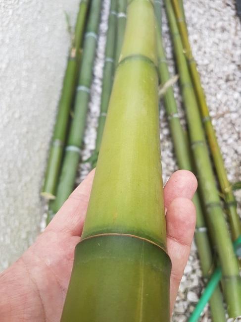 utilisation de bambous - Page 2 20180411