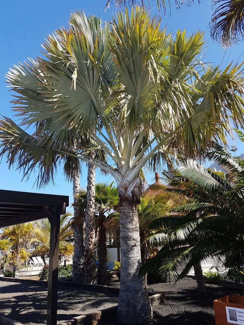 Espagne - La Palma (Isla Bonita), Les Canaries - Page 2 20180439