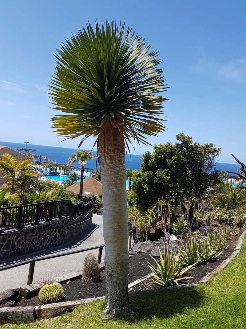 Espagne - La Palma (Isla Bonita), Les Canaries 20180461