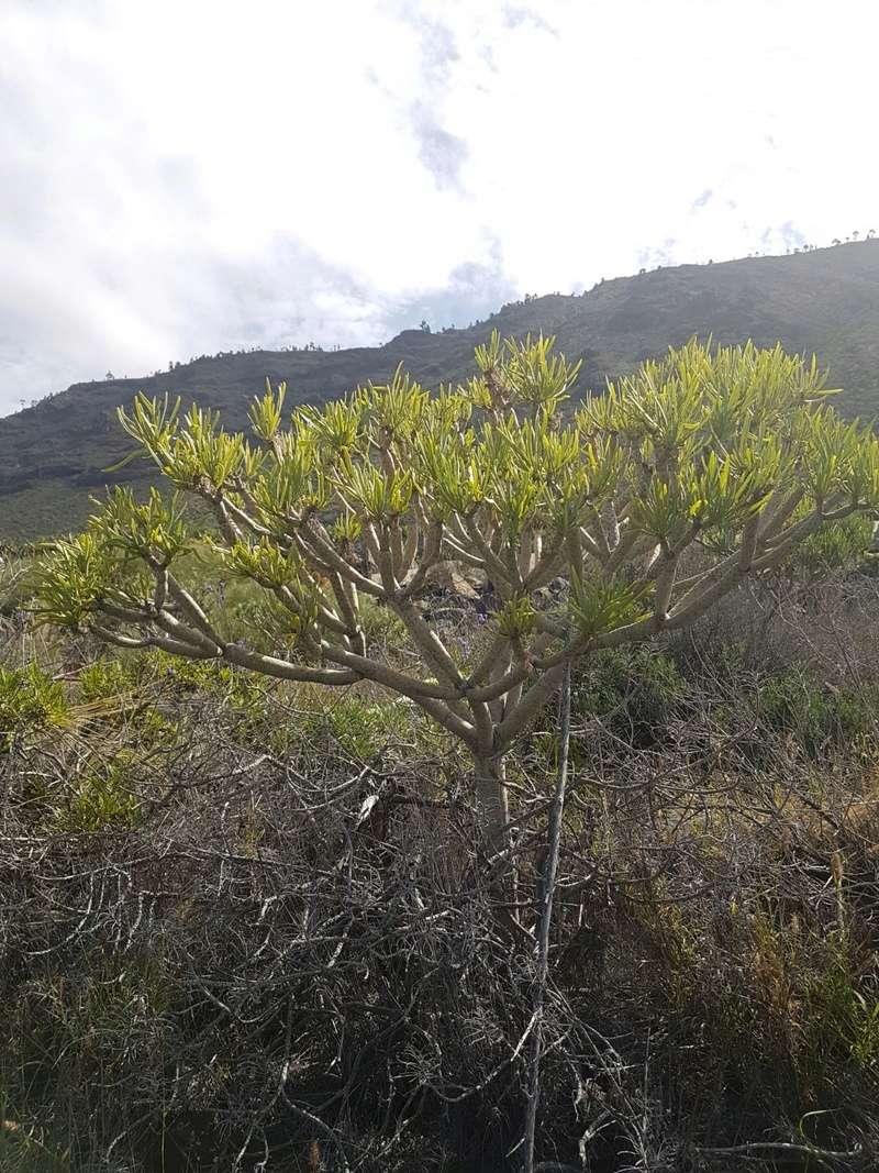 Espagne - La Palma (Isla Bonita), Les Canaries 20180464