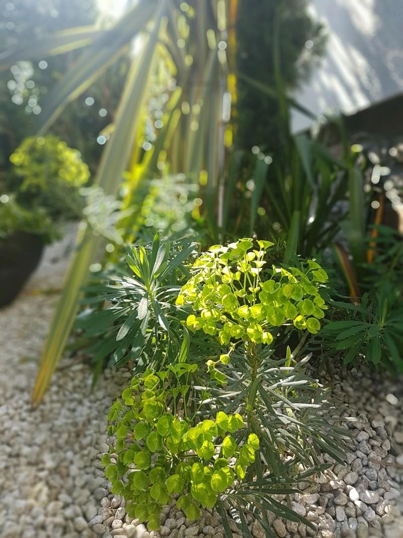 les jardins sont beaux en mai ! 20180553