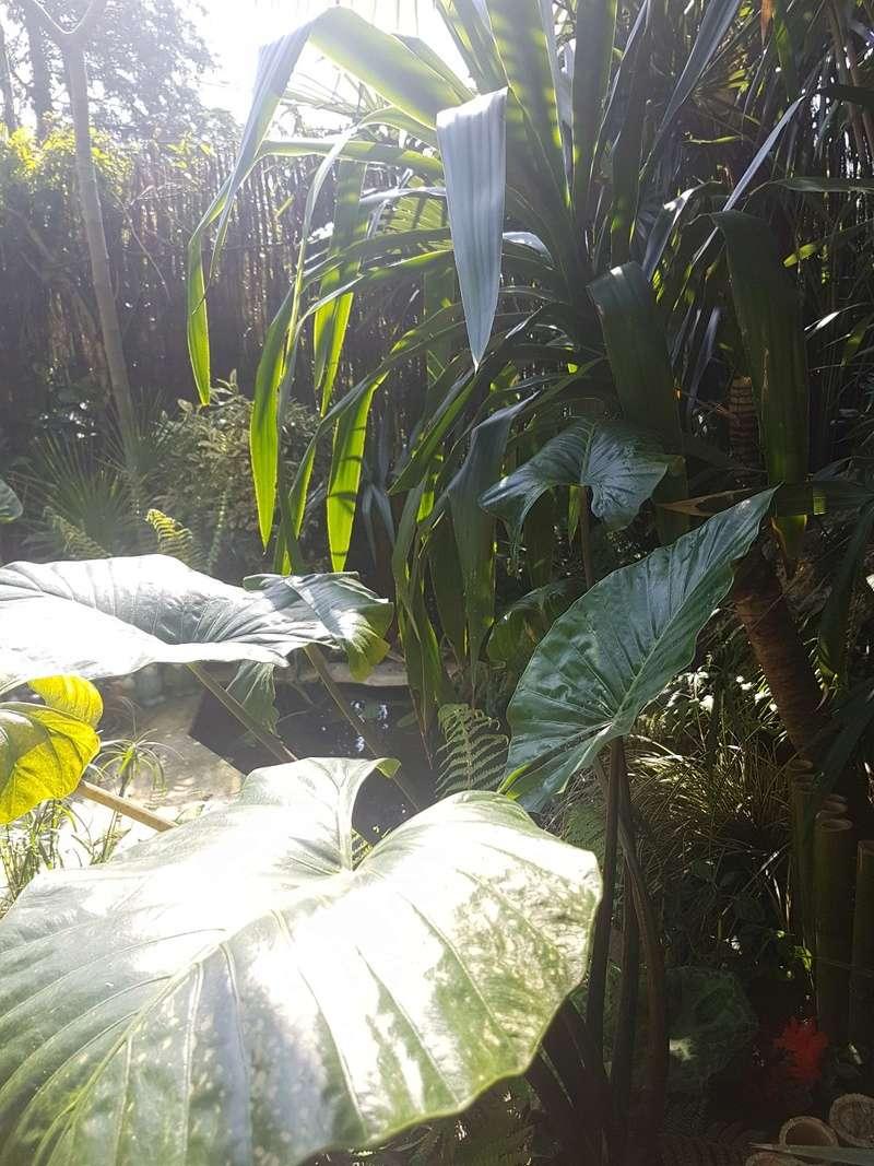 Rémi - Mon (tout) petit jardin en mode tropical - Page 7 20180554