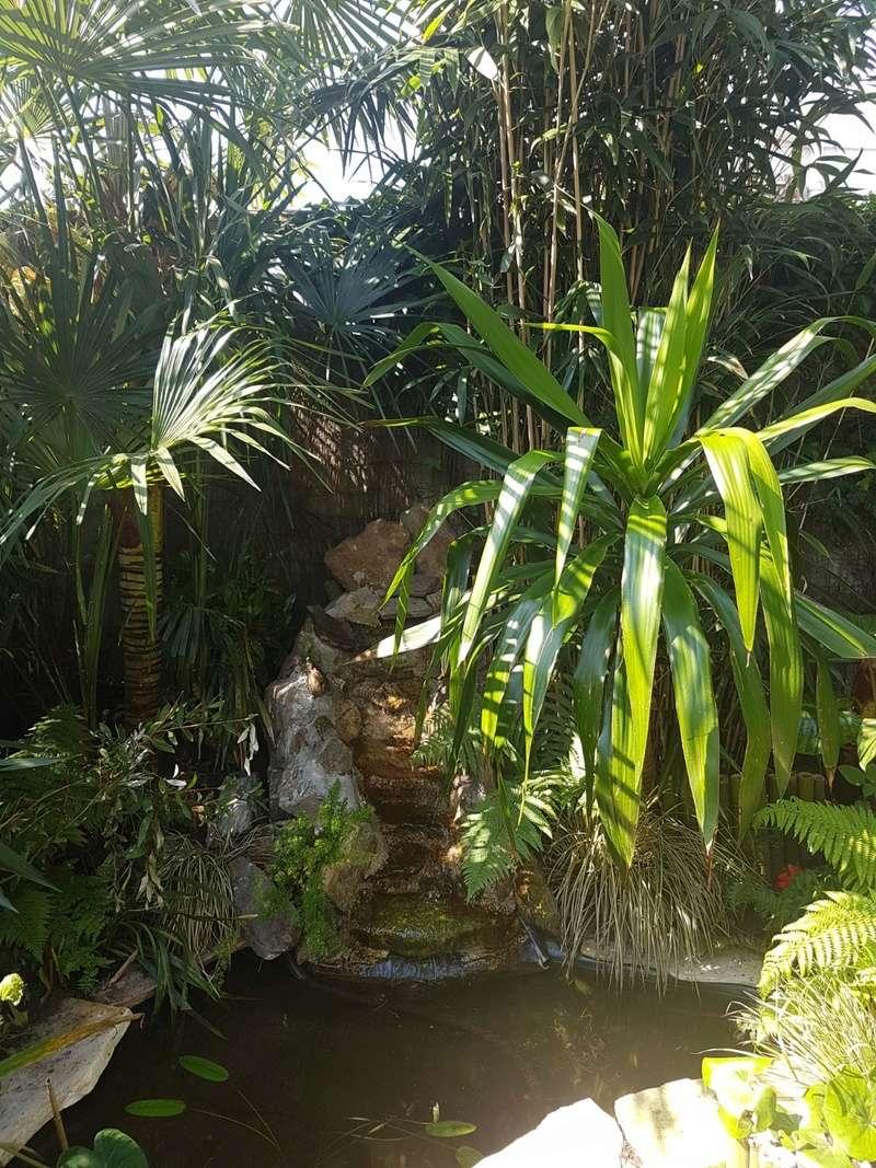 Rémi - Mon (tout) petit jardin en mode tropical - Page 7 20180555