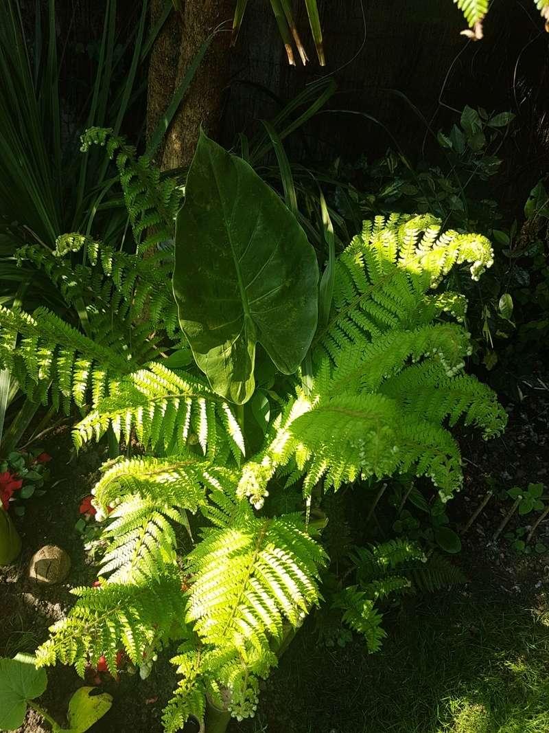 Rémi - Mon (tout) petit jardin en mode tropical - Page 7 20180559