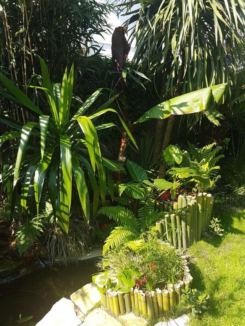 Rémi - Mon (tout) petit jardin en mode tropical - Page 7 20180560