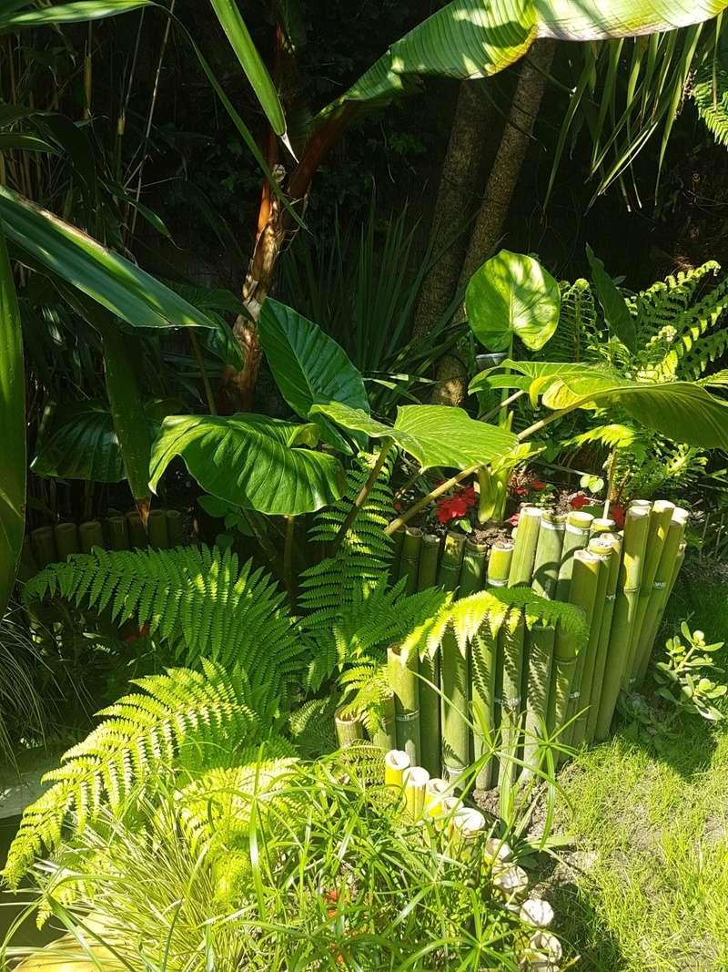 Rémi - Mon (tout) petit jardin en mode tropical - Page 7 20180563