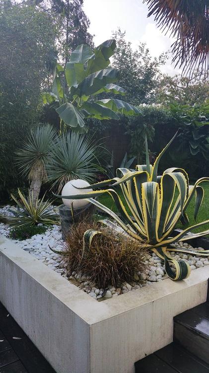 Mon (tout) petit jardin en mode tropical - Page 3 Apres_10