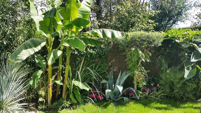 Mon (tout) petit jardin en mode tropical - Page 3 Apres_11
