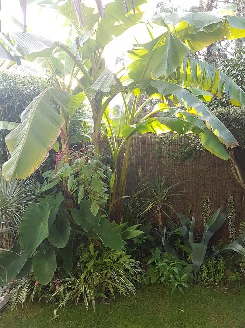 Mon (tout) petit jardin en mode tropical Aprys_14