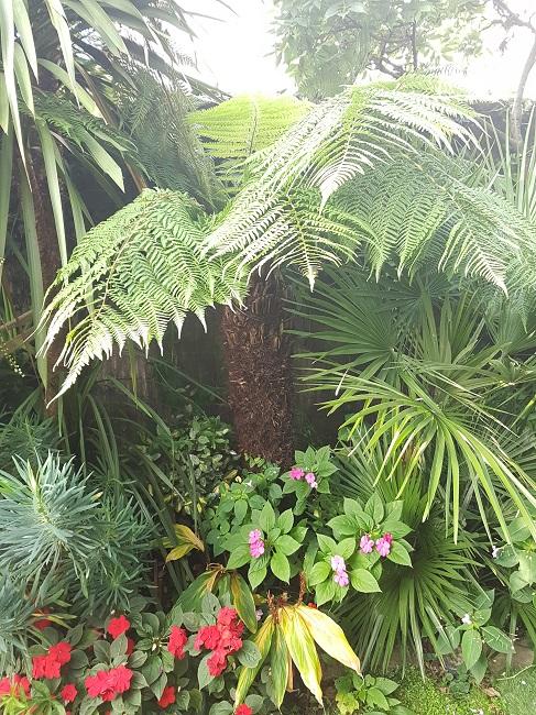 Mon (tout) petit jardin en mode tropical Aprys_17