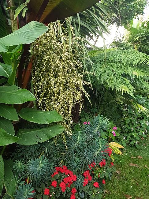 Mon (tout) petit jardin en mode tropical Aprys_18