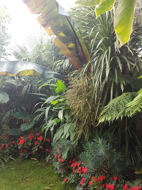 Mon (tout) petit jardin en mode tropical Aprys_19
