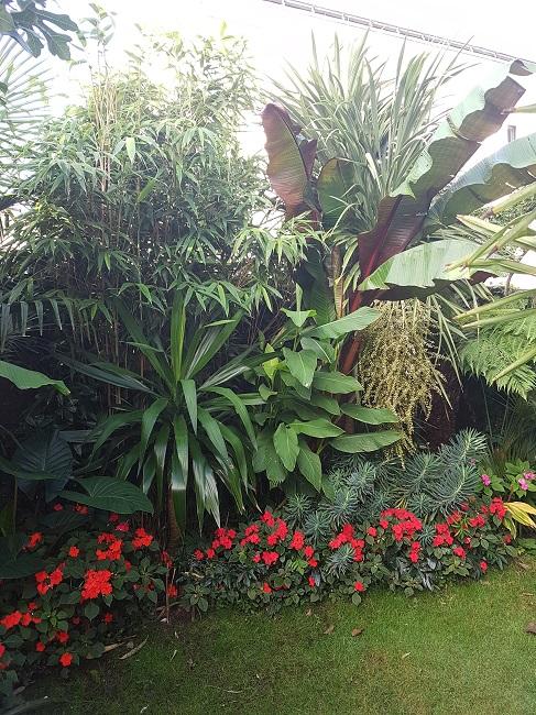 Mon (tout) petit jardin en mode tropical Aprys_20